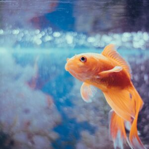 Aquariumvissen (Voeding & accessoires)