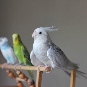 Zangvogels